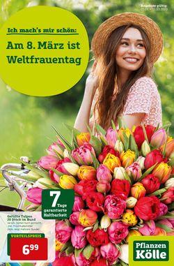 Prospekt Pflanzen-Kölle vom 05.03.2020