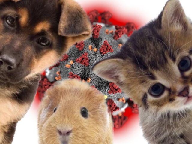 Kann sich mein Haustier mit dem Coronavirus infizieren und mich damit anstecken?