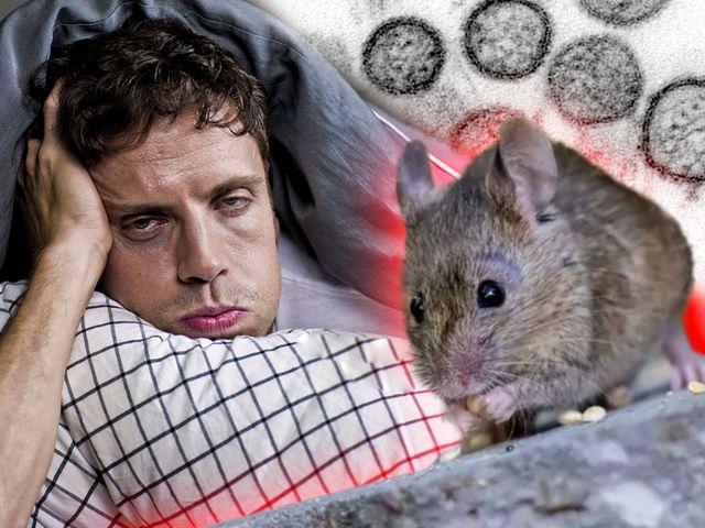 Coronavirus vs. Grippe: Welche Unterschiede gibt es?